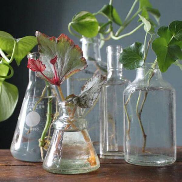 Разведите вечером 1 таблетку, чтобы ваши любимые цветы целый год радовали своей красотой и великолепием