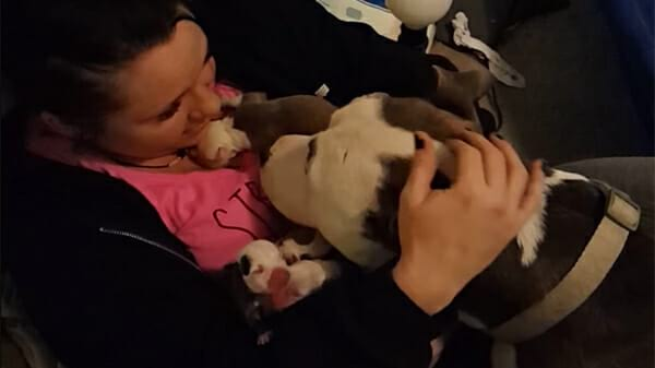 Эта женщина приютила собаку и помогла ей родить 10 щенков. В ответ собака решила отблагодарить помощницу ...